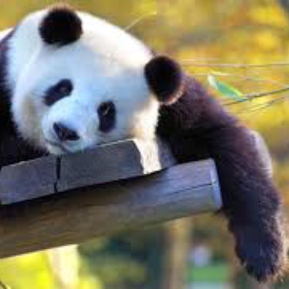 pandabearsales